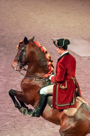 Horse School