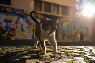 Cats of Lisbon